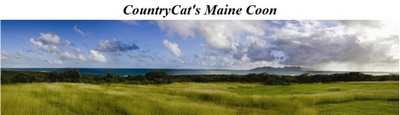 DK Country Cat's Maine Coon